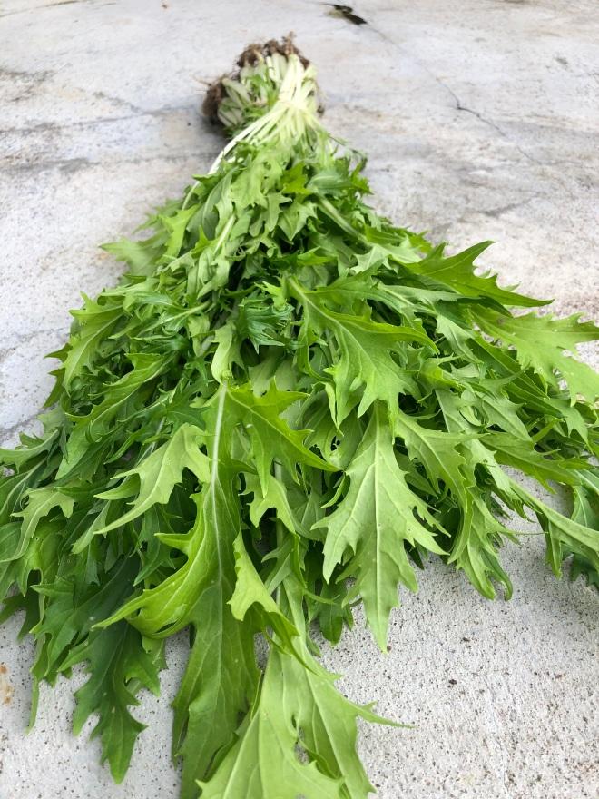 Foto van groene bladeren: raapstelen